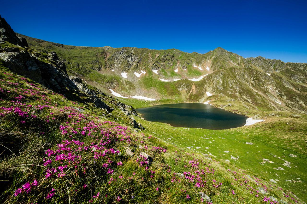 Cindrel Transylvania Sibiu Rododendron photographer ionescu vlad
