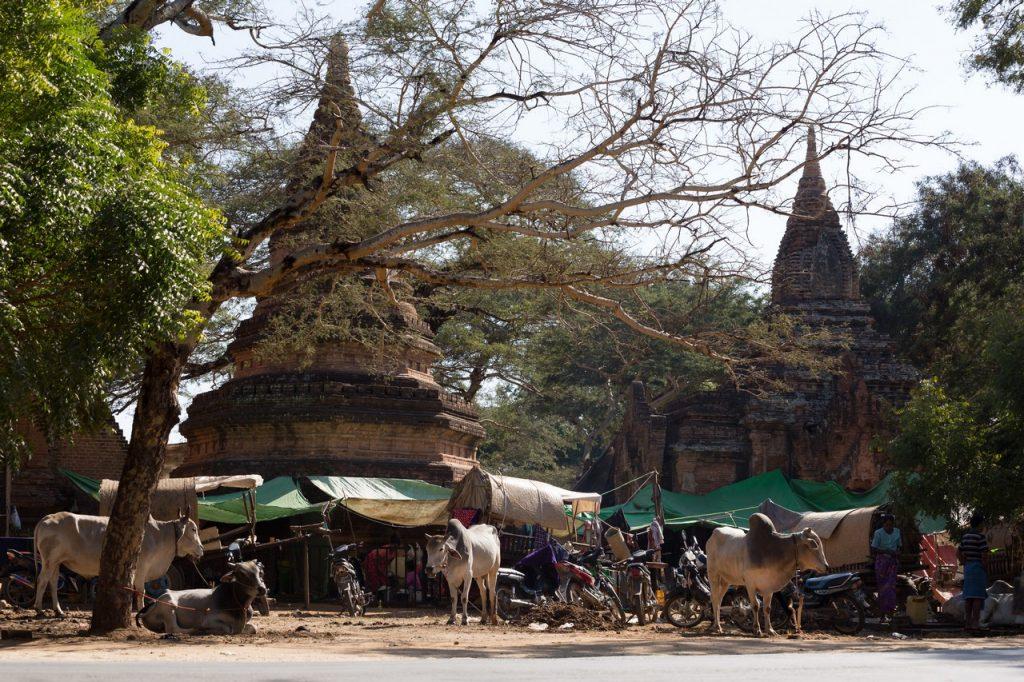 ionescu vlad myanmar burma bagan ananda festival9